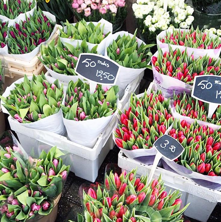 tulipanes peeptoes
